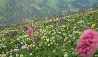 Çiçekli Yaylası