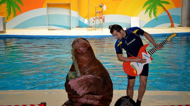 Dolphinarium İstanbul