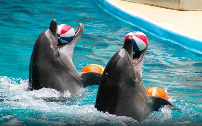 İstanbul Dolphinarium Nasıl Gidilir