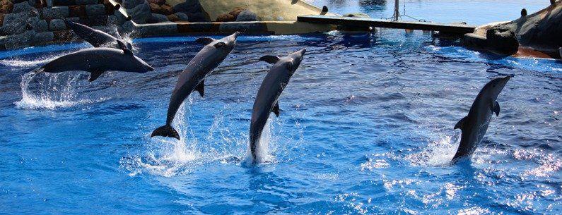 Antalya Aqualand Dolphinland 2