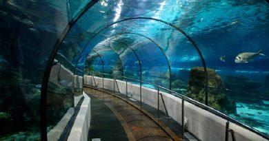 Bayrampaşa Sea Life Akvaryum