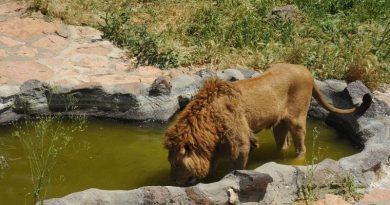Gaziantep Hayvanat Bahçesi Nerede